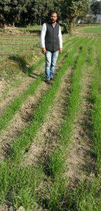 जैविक खाद से तैयार हो रही फसल दिखाते किसान अनिल पांडे