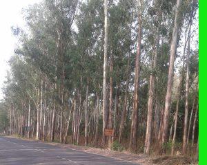 हल्द्वानी-रुद्रपुर मार्ग में स्थित टांडा जंगल