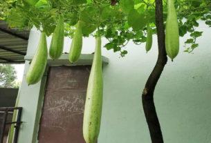 जैविक सब्जियों से लदी अनिल की बगिया